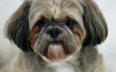 Hundeudstyr til bilen kan være stilrent
